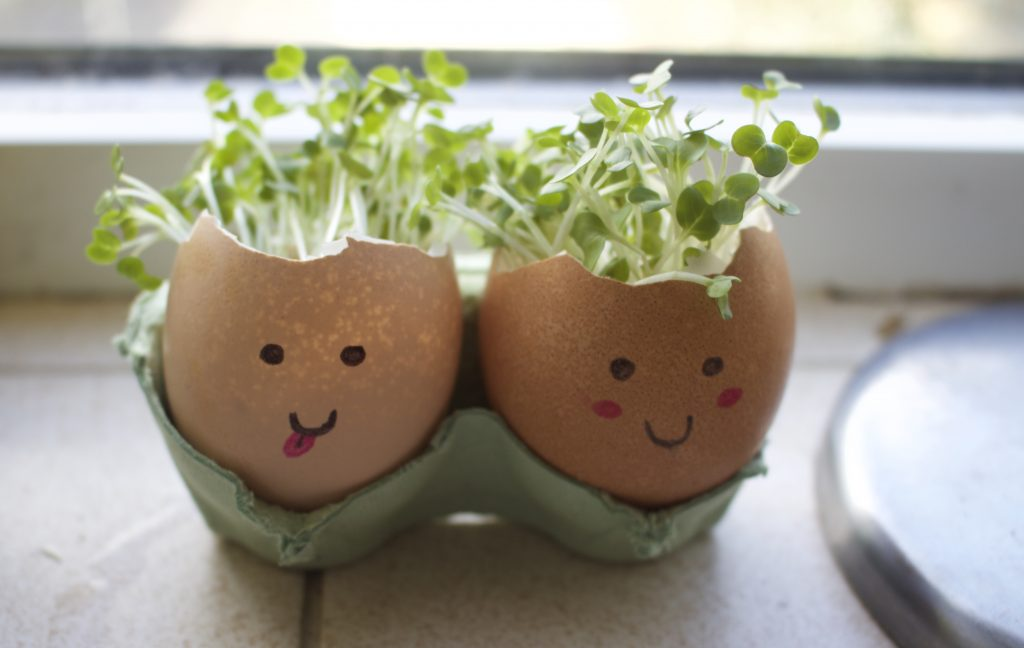 cress growing in an egg shell with a face on it, the cress looks like hair