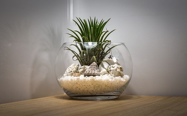 Terrarium with plants inside