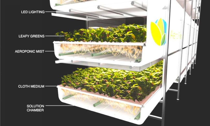 Vertical farming for beginners