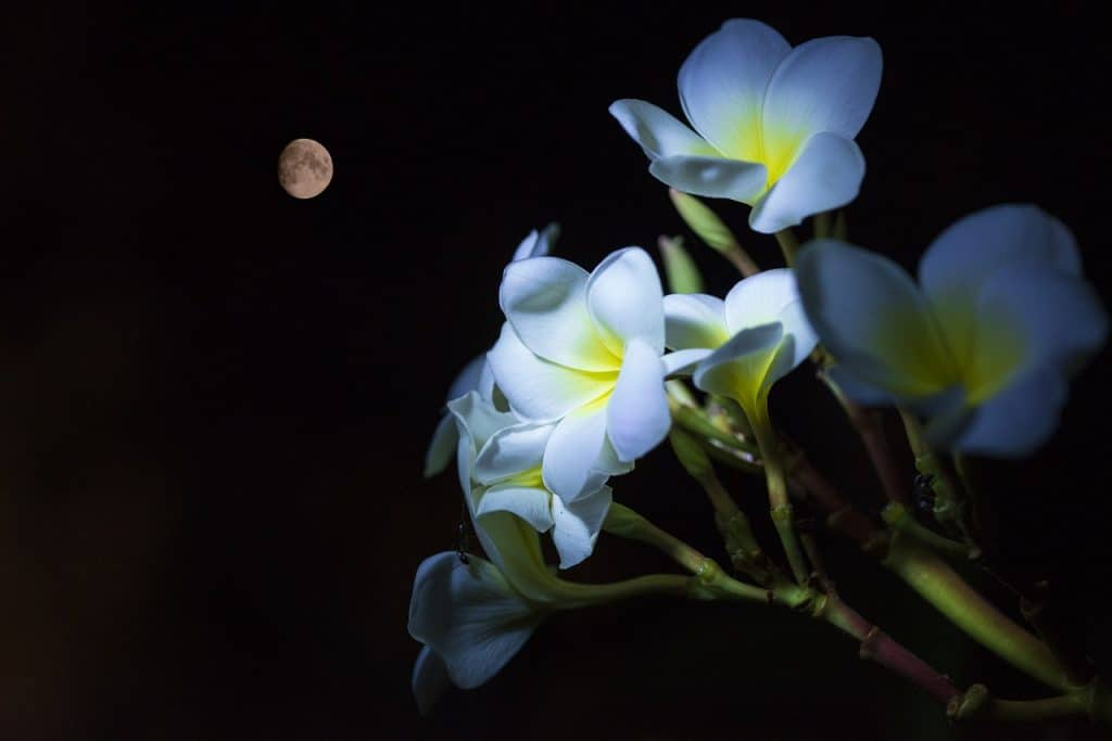 plant at night with the moon in the background