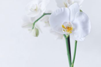 orchid-4720841_1280