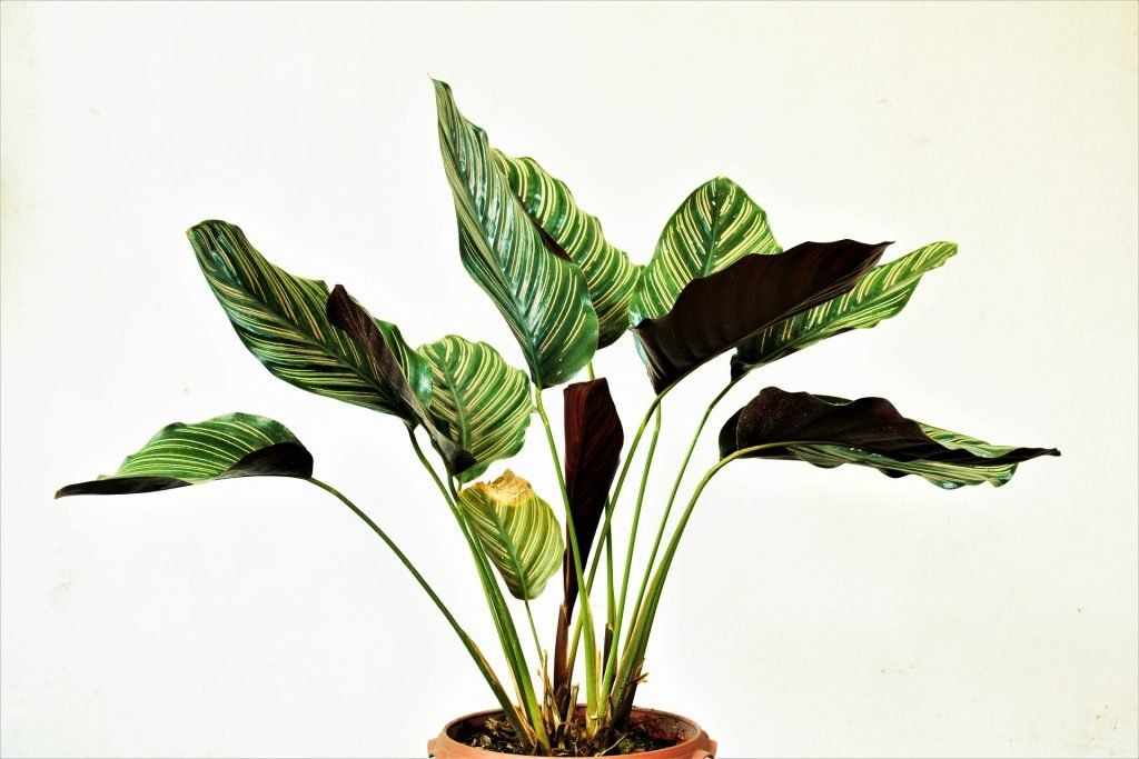 can indoor plants survive outside?