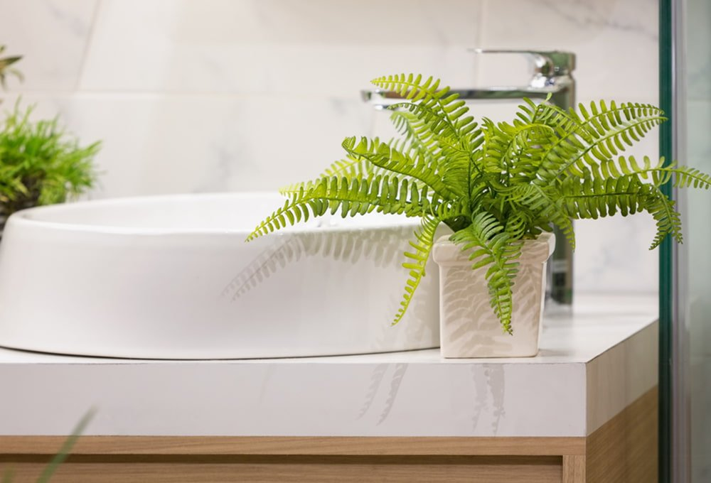 How Often To Water Ferns Indoors - Here Are The Best Practices