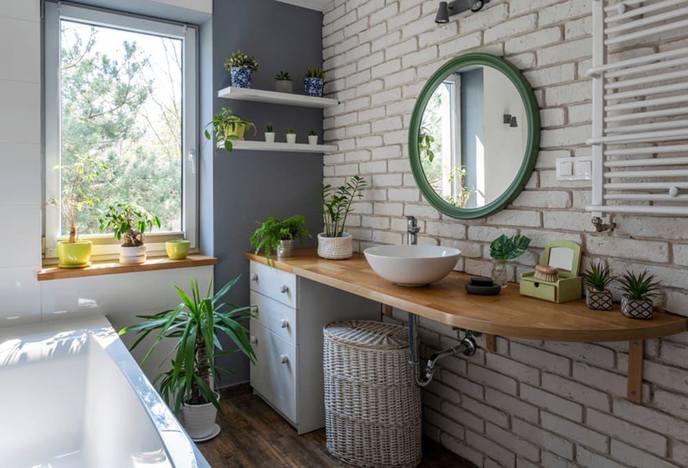 Indoor Plants That Absorb Humidity